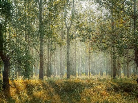 French woodland