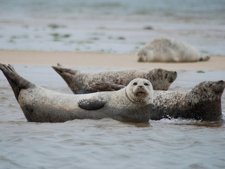 Seals at Great Yarmouth